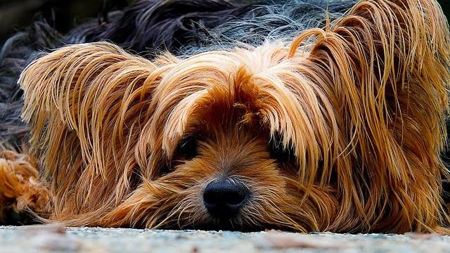 dog-200942_640[1][1]